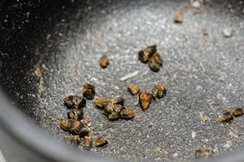 Hmm... hiiren papanoitako sieltä palon sisältä tuli?